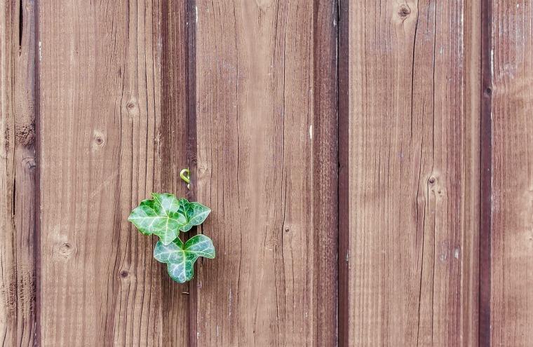 wood-482288_1280